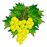 wiązki winogrono Zdjęcia Stock