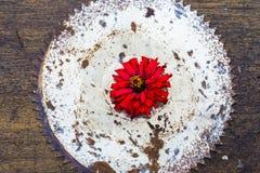 Wizualnej alegorii stary saw i kwiat Odgórny widok Zdjęcia Stock