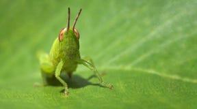 wizytówki formata pasikonika zieleni liść zdjęcie stock