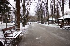 Wlec dla Wycieczkować w parku w zimie Zdjęcia Royalty Free