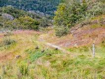 Wlec Paseo De Los angeles Isla, wyż i Magellan gąski w Tierra de fotografia royalty free