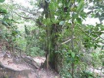 Wlec po środku lasu Trindade, Paraty - Zdjęcie Royalty Free