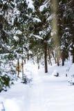 Wlec sposób w śnieg zakrywającym rosyjskim lesie zdjęcia stock