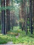 Wlec w drewnach blisko morza w diunach fotografia royalty free