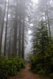 Wlec w lesie, Redwood park narodowy, Kalifornia usa Zdjęcia Royalty Free