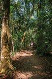 Wlec z ludźmi po środku lasu w Itatiaia parku Zdjęcie Royalty Free
