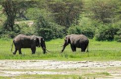 Wlidlife dans Maasai Mara, Kenya Images libres de droits