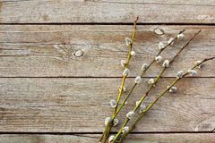 Wllow twigs on wooden table Stock Photography