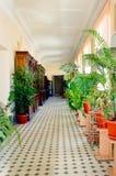 Wnętrze biurowe przesłanki, dekorujący z tropikalnymi roślinami Pionowo Fotografia obrazy royalty free