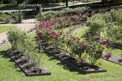 Wnętrze róża park w Tyler obraz royalty free