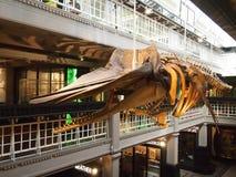 Wnętrze Machester muzeum, Anglia Zdjęcia Royalty Free