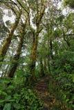 Wnętrze wilgotny cloudforest Zdjęcie Royalty Free