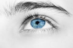 Wnikliwa spojrzeń niebieskich oczu chłopiec Zdjęcie Royalty Free