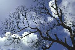 Wnter Tree. Twigs and branches of a tree under a winter sky Stock Image