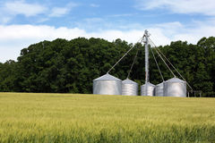 Wnter Wheat Grain Siloes Stock Photo