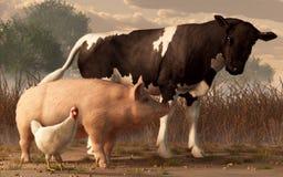 Wołowiny wieprzowina, baleron i drób, ilustracji