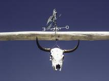 Wołowata czaszka z kogutem, wiatrowy pomiarowy instrument Obraz Royalty Free