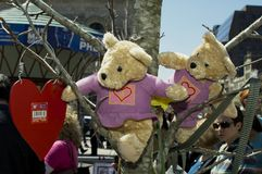 Wo teddy bears hanging in tree at Boston Marathon bombing memorial. Boston, Massachusetts USA - April 2013 - Two Teddy bears and red heart hanging from tree at Royalty Free Stock Image