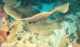 Wobbegong shark under coral Stock Photography
