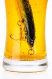 Wobbler del cebo de pesca en vidrio con la cerveza Imagen de archivo libre de regalías
