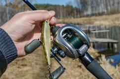 Wobblers для захватнических рыб Стоковые Изображения
