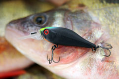 Wobblers and perch Royalty Free Stock Photography