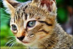6-Wochen-altes Kätzchen Lizenzfreie Stockfotos