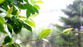 WOD kropel kaskada OD zieleń liści PODCZAS deszczu W parku zdjęcie wideo