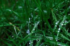 Wod krople na ciemnozielonej trawie zamkniętego rosy kropelek trawy liść ranek zamknięta woda Zdjęcia Stock