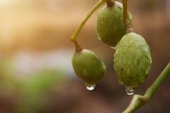 Wod krople na owoc zdjęcia stock