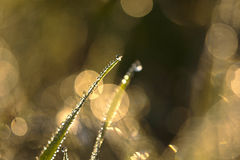 Wod krople na trawie zdjęcia stock