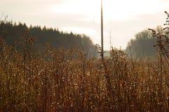 Wod krople na trawie Obraz Stock