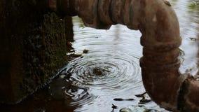 Wod krople od pęknięć drymby zdjęcie wideo