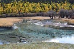 Woda & łąka Fotografia Stock