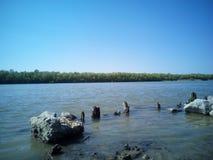 woda dryluje drzewo rzecznego pięknego widok Obrazy Royalty Free