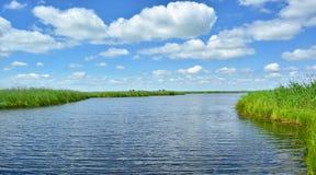 Woda horyzont i zielone płochy Zdjęcie Stock