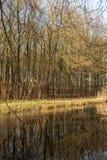 Woda i forrest wśród Holenderskiego Waterloop Forrest dla Hydraulicznego badania Obrazy Royalty Free