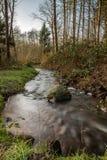 Woda i forrest wśród Holenderskiego Waterloop Forrest dla Hydraulicznego badania Zdjęcia Royalty Free