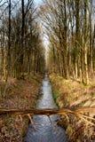 Woda i forrest wśród Holenderskiego Waterloop Forrest dla Hydraulicznego badania Fotografia Stock