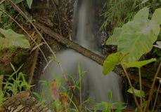 Woda i kij drewno fotografia stock