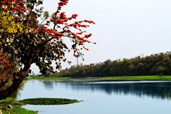 Woda i lasowy naturalny piękno Obrazy Stock