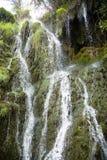 Woda i rośliny Obrazy Royalty Free