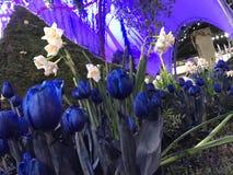 Woda kwiaty zdjęcia royalty free
