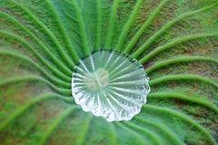 Woda na lotosowym liść Fotografia Royalty Free