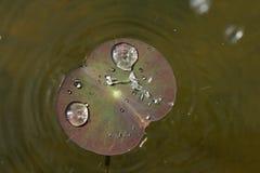 Woda opuszcza na liściu w dziewczyny dziecka kształcie Zdjęcie Royalty Free