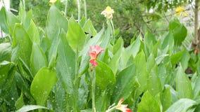 Woda opuszcza podlewanie kwiaty Krople woda irygują zielonego tropikalnego ulistnienie z kwiatami tropikalni ptaki czyścą piórka zbiory wideo