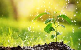Woda opuszcza spadać na nowej flancy na słonecznym dniu w ogródzie w lecie Obrazy Stock