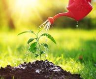 Woda opuszcza spadać na nowej flancy na słonecznym dniu w ogródzie w lecie Zdjęcia Stock