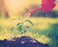 Woda opuszcza spadać na nowej flancy na słonecznym dniu w ogródzie w lecie Zdjęcia Royalty Free