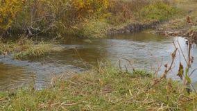 Woda płynie w małej rzece zdjęcie wideo